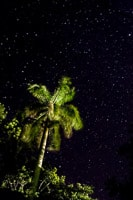 Starry Sky With Palm