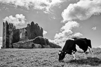 Castle and Cow