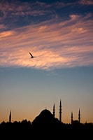 Seagull Flying Over the Rüstem Paça Mosque at Sunset